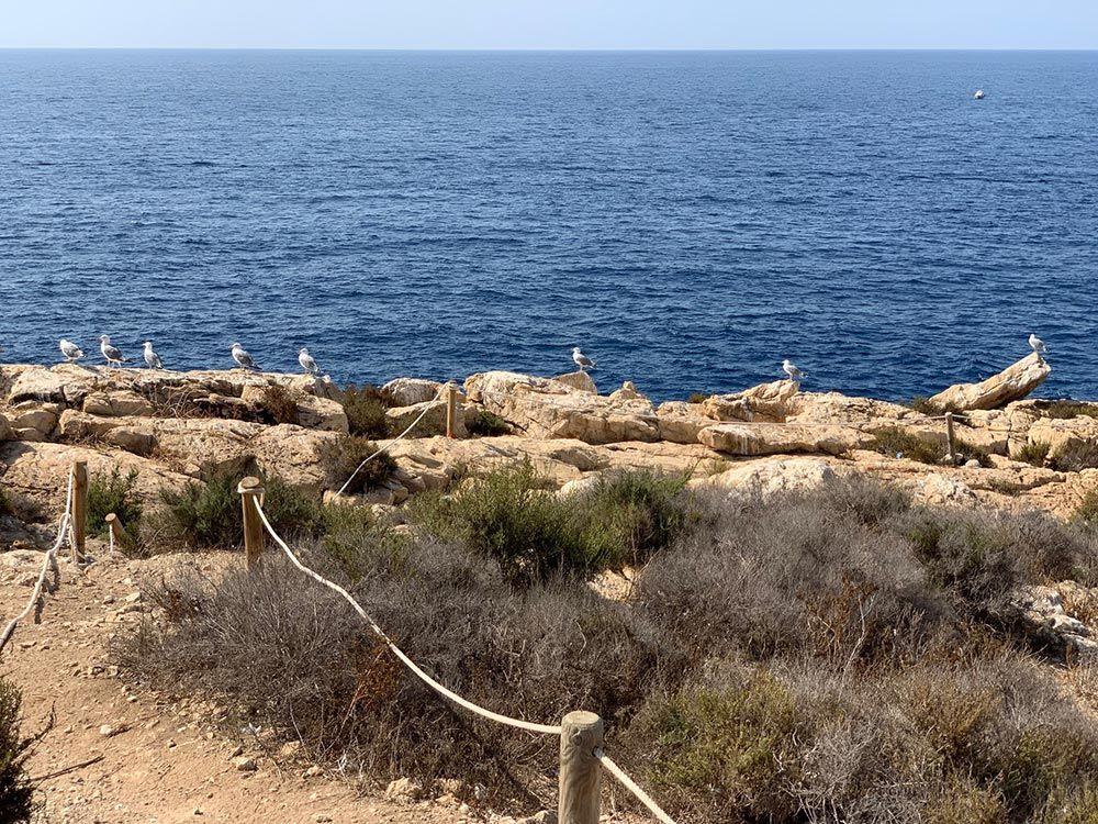 Las gaviotas son las únicas habitantes de la Isla de Benidorm