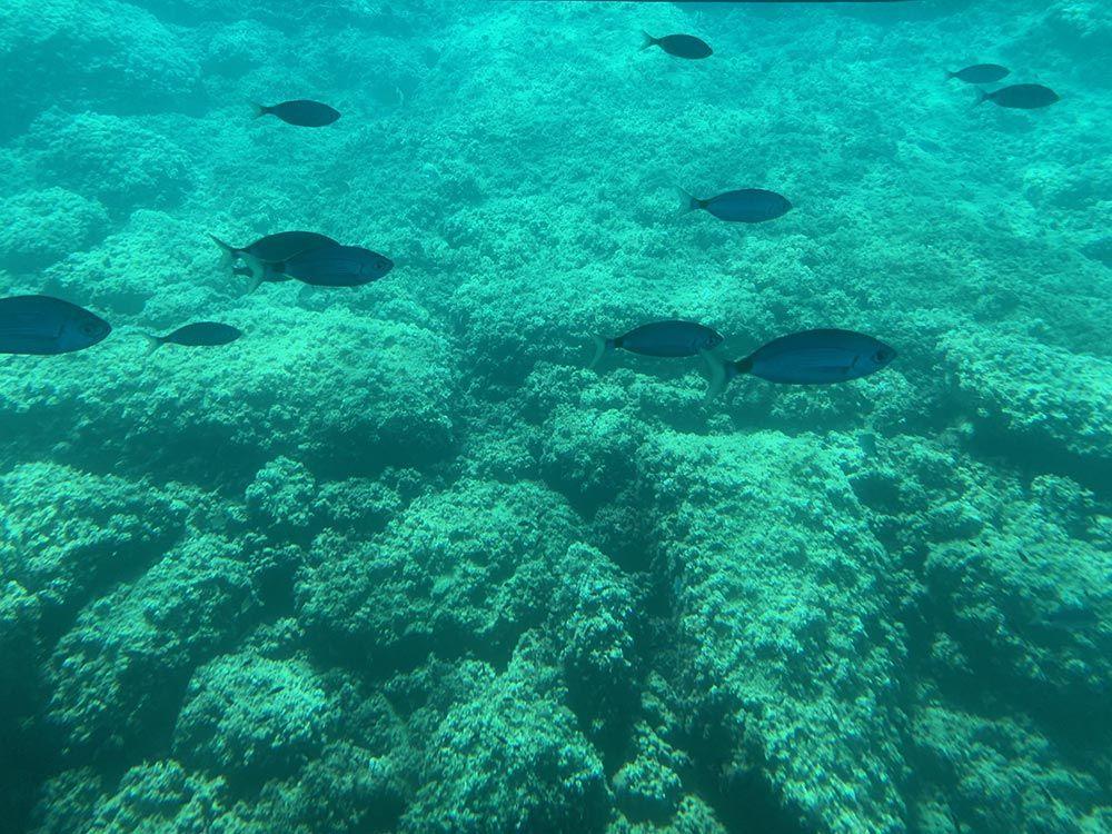 Fauna marina que se disfruta en una excursión a la Isla de Benidorm
