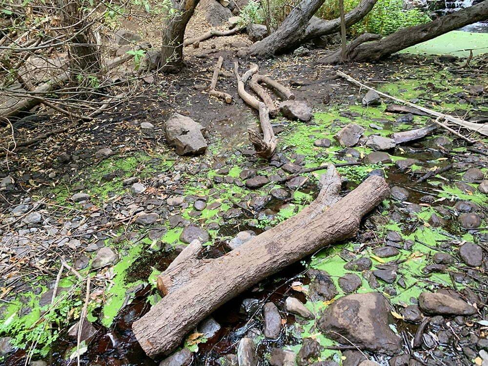 La ruta de la Cascada de Arure está llena de obstáculos naturales