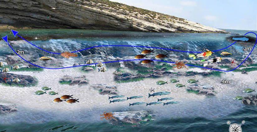 Ruta de snorkel en la Isla de Benidorm